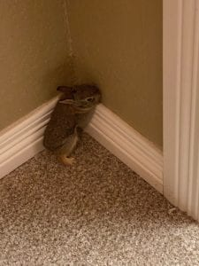 A baby rabbit in the corner of my basement - 2020 keeps getting crazier
